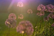 Free Flower , Czech Republic, Pardubice City Stock Image - 72051391