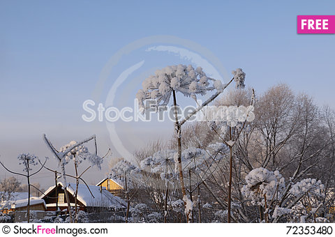 Free Trees In Cold Winter Day Stock Photo - 72353480
