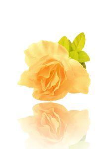 Artificial Rose Royalty Free Stock Photos
