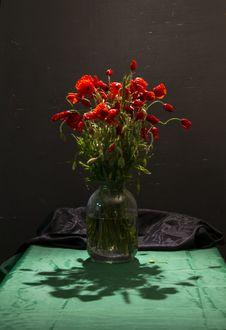 Free Poppy Flowers Stock Photo - 72700010