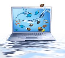 Free Lap Top And Fishes Royalty Free Stock Photo - 7283115