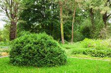 Free Woodland Scenery Stock Photos - 72850633