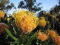 Free Exotic Flowers Stock Photo - 733960
