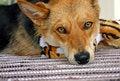 Free Sad Dog Stock Photography - 735432