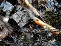Free Small Stream Flow Stock Photo - 737150