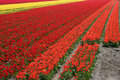Free Red Flower Field Stock Images - 738594