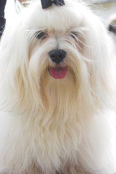 Free Dog Stock Photo - 730890