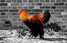 Free Rooster Abstract Stock Image - 731431