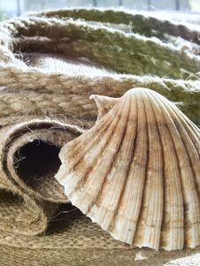 Free Seashell And Jute Stock Photos - 731833