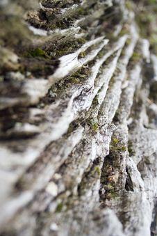 Weathered Tree Stump Royalty Free Stock Photo