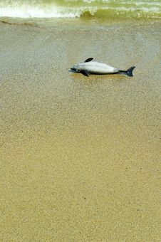 Free Dead Dolphin Stock Photos - 732613