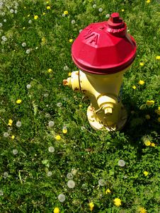Free Fire Hydrant Surrounded By Grass And Dandelions Royalty Free Stock Image - 732836