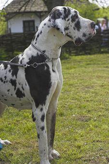 Free German Dog Stock Images - 732854