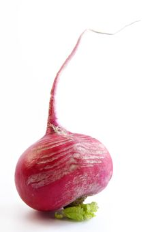 Free Radish Royalty Free Stock Photos - 733008