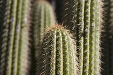 Free Cactus 2 Stock Image - 733141