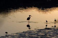 Free Estuary Birds Royalty Free Stock Photos - 733358
