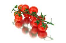 Free Tomatoes Stock Photos - 733443