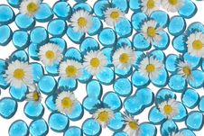 Free Background Daisies Glass Stock Photos - 734013