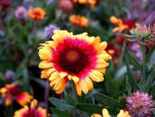 Free Vibrant Orange Flower Royalty Free Stock Photo - 734025