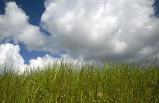 Free Cloudy Grass Royalty Free Stock Image - 734976