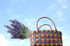 Free Lavender In The Basket & Blue Sky Royalty Free Stock Photography - 736287