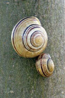 Free Snail Twins Little & Large Stock Photography - 736812