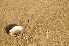 Free Shell On Beach Stock Image - 736831