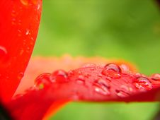 Free Complement Colors On Flower Royalty Free Stock Image - 737186