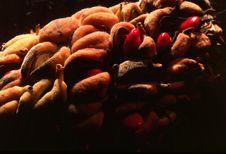 Free Seeds 1 Stock Photos - 737833