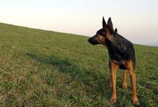 Free German Shepherd Stock Image - 738141