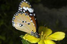 Free Butterfly De Colores Pardos,blancos Y Negros Stock Photography - 739252