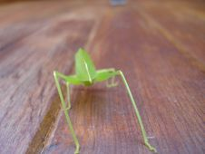 Free Grasshopper Angle On Wood Royalty Free Stock Image - 739426
