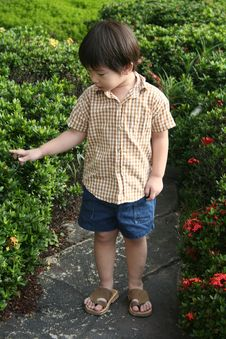 Free Boy At Garden Royalty Free Stock Image - 739566