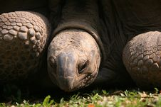 Free Tortoise Stock Photos - 739623