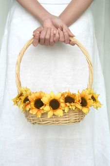 Free Woman S Hand Holding Sunflower Royalty Free Stock Image - 739856