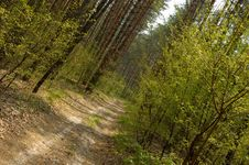 Free Forest 1 Royalty Free Stock Photography - 739997