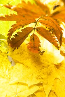 Free Autumn Leaf Stock Images - 7335204