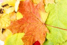 Free Autumn Leaves Background Stock Images - 7361694