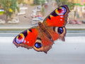 Free Beautiful Colorful Butterfly On The Window Stock Photos - 73635473
