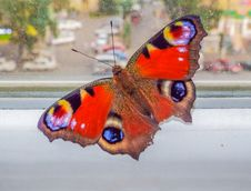 Beautiful Colorful Butterfly On The Window Stock Photos