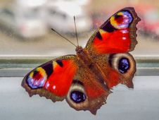 Beautiful Colorful Butterfly On The Window Royalty Free Stock Photography