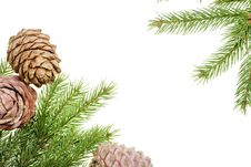 Free Pine Branches Stock Photography - 7373822