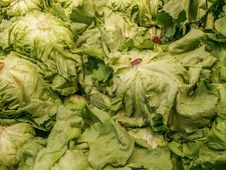 Lettuce, Green Salad On Market Royalty Free Stock Photos