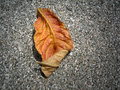 Free Dry Leaf Stock Photography - 743532