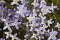 Free Purple Flowers Stock Photo - 744700