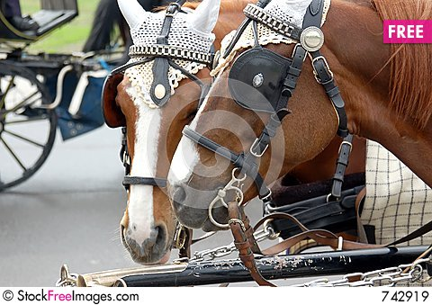 Free Cab Horses Royalty Free Stock Images - 742919