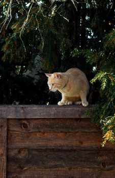 Free Cat On Alert Stock Images - 741094