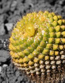 Free Cactus Stock Photo - 742310