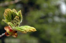 Free Magnolia Blossom Royalty Free Stock Photo - 742325