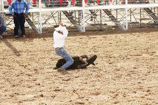 Free Calf Roping 2 Stock Photo - 742470